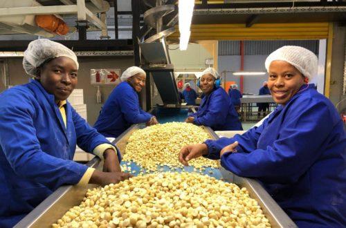 Article : De la finance  à la noix de macadamia. Success story d'inspiration